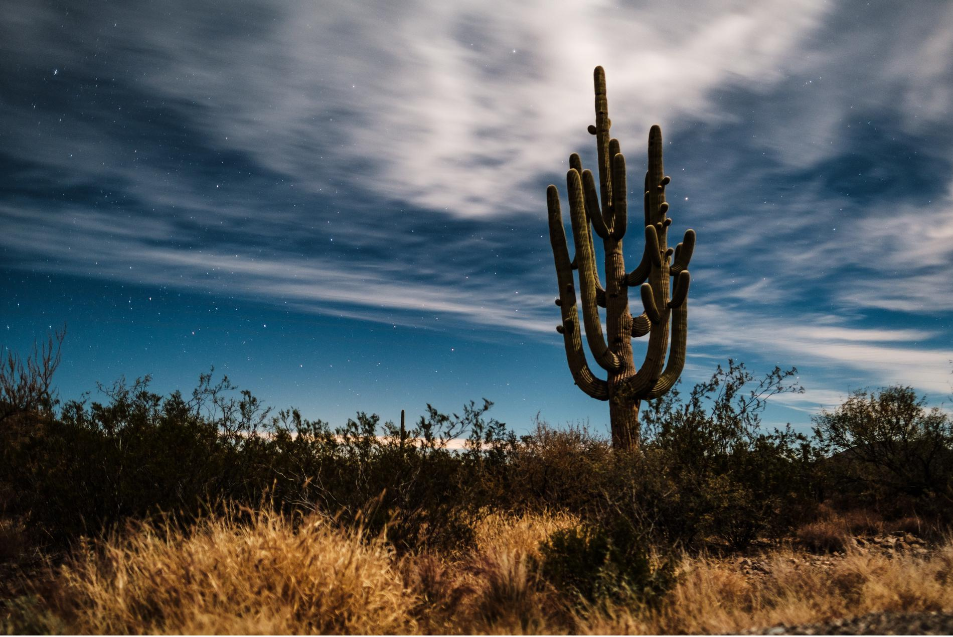 Top 10 Things To Do in Tucson